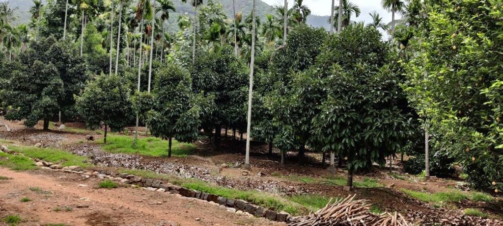farm-5